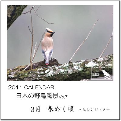 「春めく頃」~ヒレンジャク~