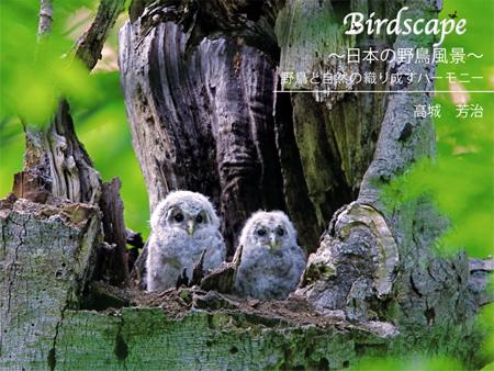 写真集 Birdscape