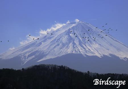 富士山と野鳥たち