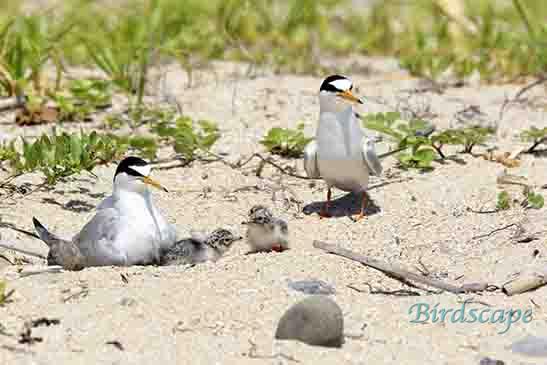 http://www.nature-bird.com/wp-content/uploads/2021/08/3B.jpg